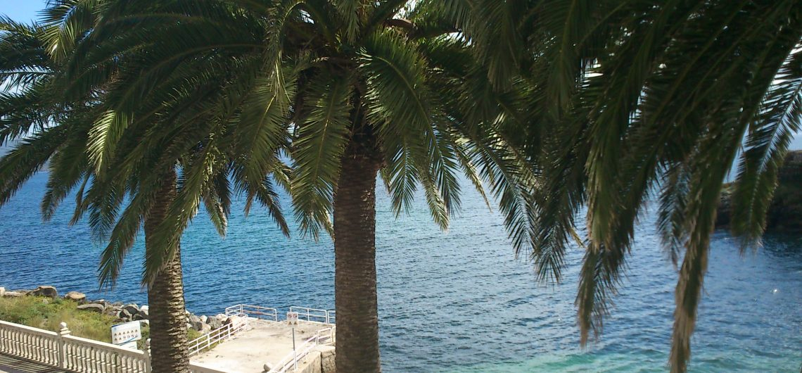 Finisterre palm trees