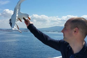 Funny moments with seagulls in the Catamaran through the Ria de Arousa