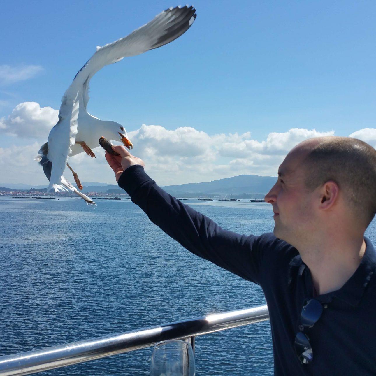 Funny moments with seagulls in the Catamaran through the Ria de Arousa